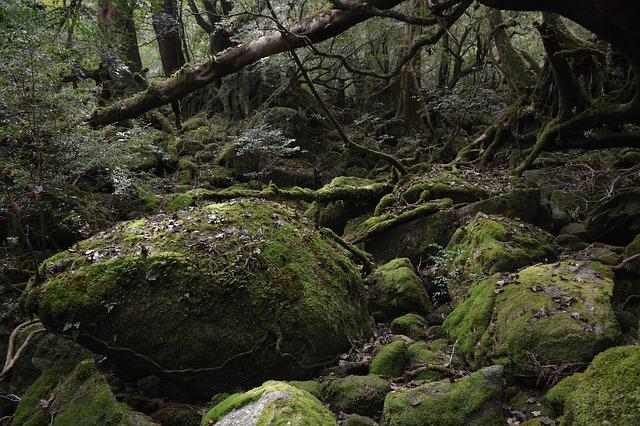 屋久島・もののけの森